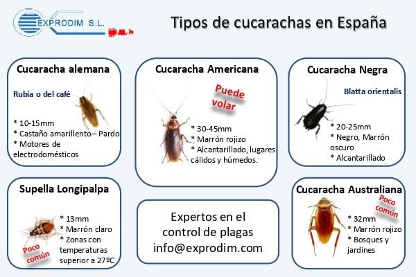 Tipos de cucarachas en España | Exprodim