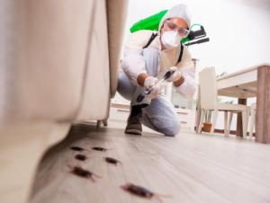 Control de plagas | Exprodim