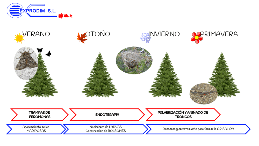 Procesionaria del pino esquema tratamientos de actuación| Exprodim