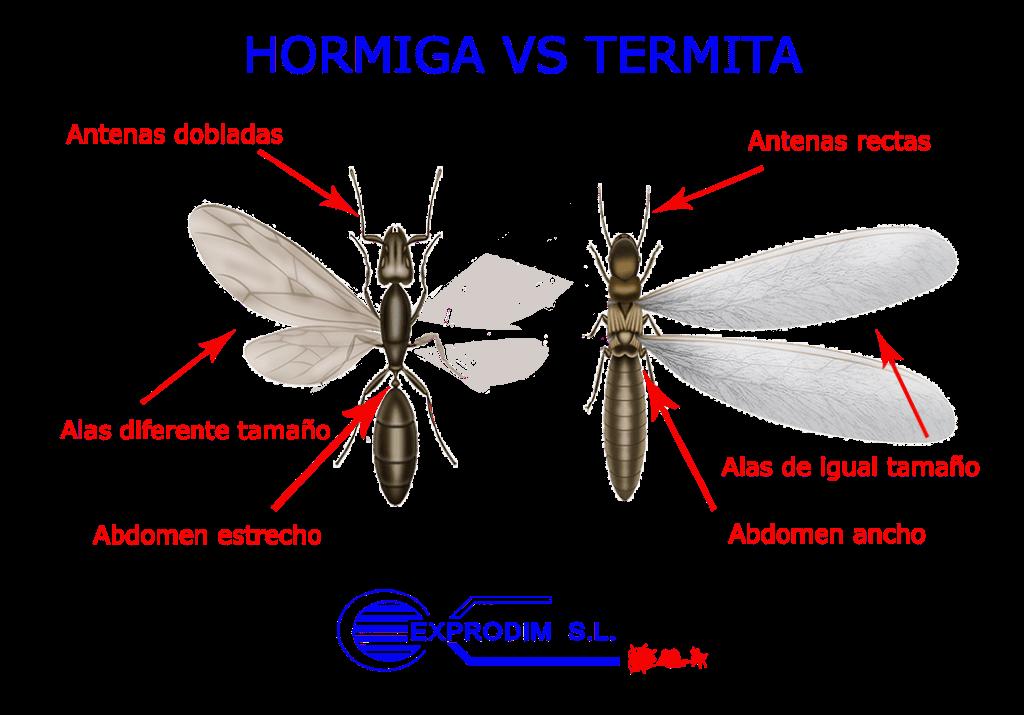 hormiga y termita