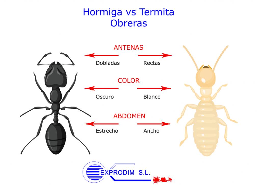 hormiga_termita_obrera